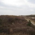 Blick auf die Dünen